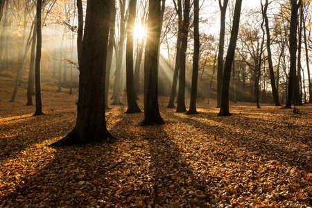 iluminado a contraluz: Bosque en otoño con luz de fondo Foto de archivo