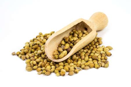 culantro: Las semillas de cilantro