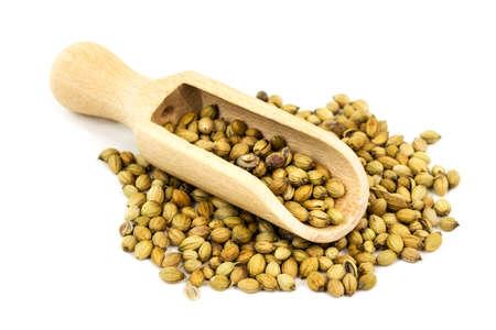 cilantro: Las semillas de cilantro