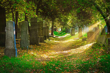 Cemetery With Sunray In Autumn Фото со стока