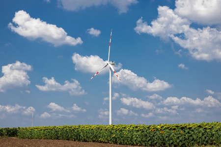 Sunflowers And Wind Turbine, renewable energy to protect the environment