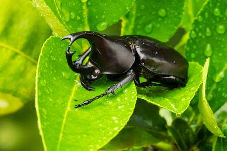 Nahaufnahme von Tier sitzen auf Blatt mit Regentropfen