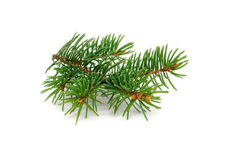 Fir Twig Isolated, close up of christmas decoration on white background Archivio Fotografico