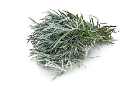 Rosemary, close up of scented herb on white background