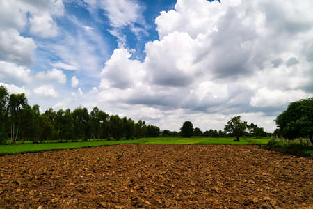 Plowed Field with Cumulus Clouds, agriculture landscape in summer