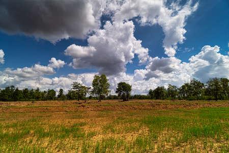 Landscape With Rice Field, nature with cumulus clouds Standard-Bild