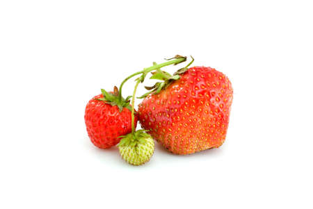One green, unripe and pair of ripe red strawberries isolated on the white background photo