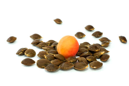 Single apricot over some kernels isolated on the white background