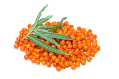 buckthorn: Pile of sea buckthorn berries and some leaves isolated on the white background