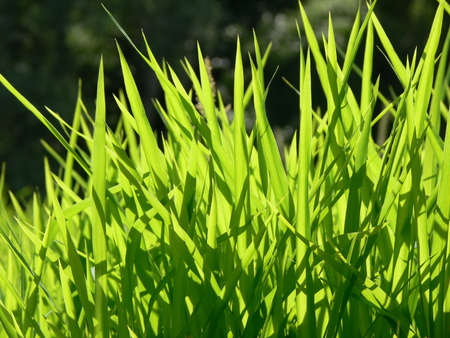 Emerald grass close-up photo