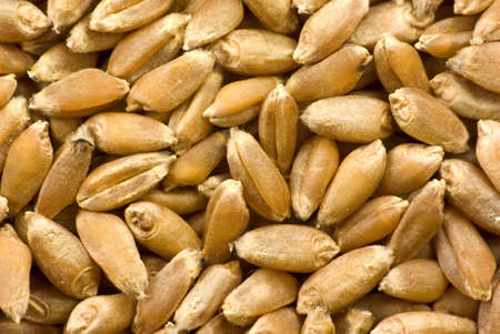 groats: Barley grains close-up (background) Stock Photo