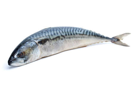 Single fresh mackerel fish isolated on the white background (focused on the fish head) Stock Photo