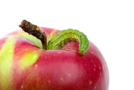 Big green worm crawling over red apple isolated on the white background photo