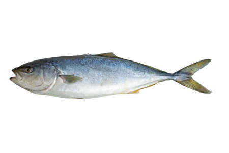 Single tuna fish  isolated on the white background