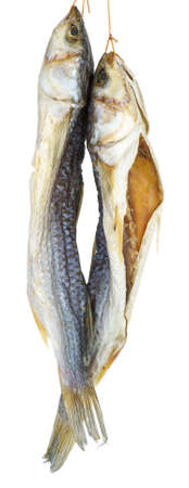 Two dried salted grey mullet fishes isolated on the white background Stock Photo - 15435731