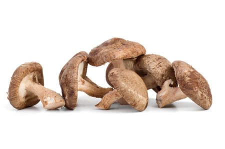 Three fresh shiitake mushrooms on white background Stock Photo