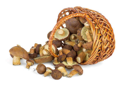 Basket and cepe mushrooms on the white background