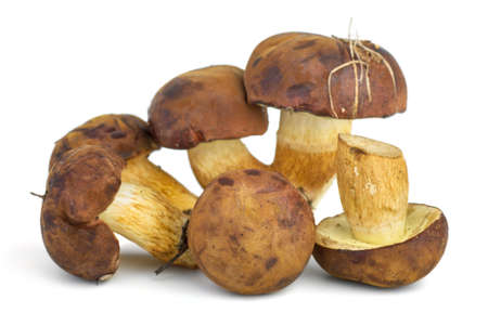 cepe: Edible mushrooms  Cepe, yellow boletus  on the white background