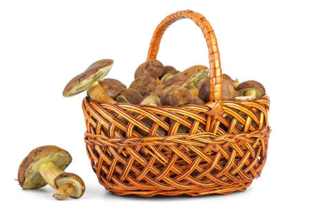 cepe: Basket with cepe mushrooms