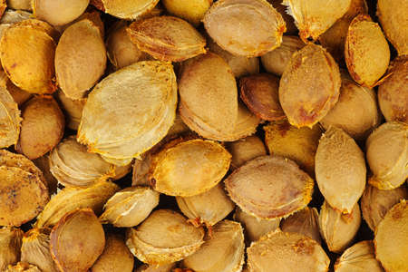 Abstract background: Apricot pits Banque d'images