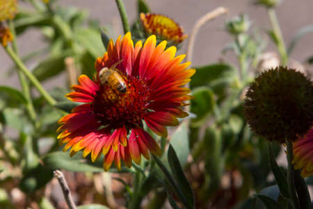 Bee on Flower Фото со стока - 41326907