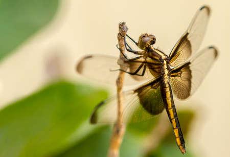 Close up of a dragonfly Фото со стока