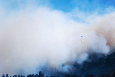 forest fire: Fighting a Forest Fire