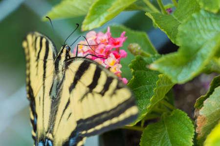 Yellow butterfly on flower Фото со стока