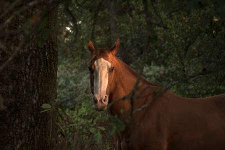 Horse at Sunset Фото со стока