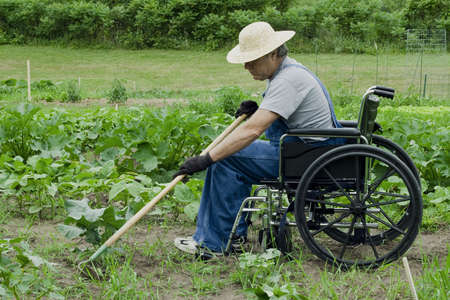 garden tool: handicapped man in a wheelchair tending his garden