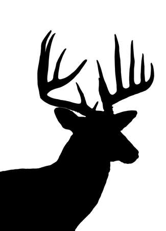 whitetail buck: whitetail deer head silhouette isolated