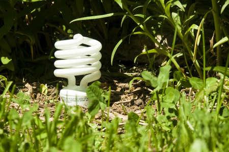 compact fluorescent lightbulb growing in a flower garden