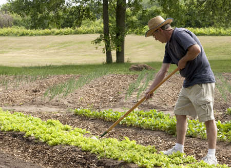 man working in his garden with a hoe Stock Photo - 9953707