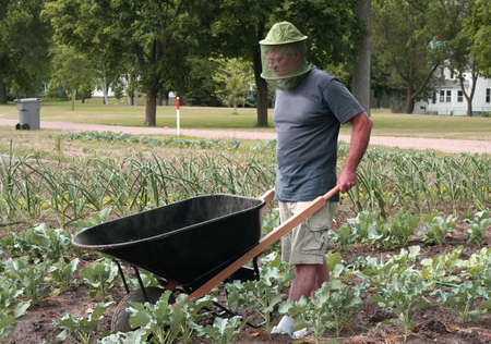 man working in his garden with a wheelbarrow Stock Photo - 9953745