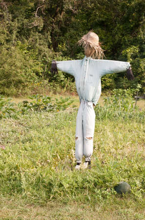 homemade straw scarecrow guarding a melon patch Stock Photo - 10444082