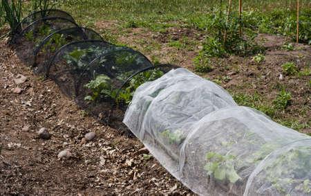 Gemüse in einem Gemeinschaftsgarten mit einem Schutzgitter abgedeckt Standard-Bild - 14125911