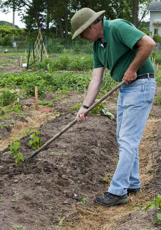 retired man cultivating plants in his garden Stock Photo - 14285940