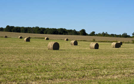 recently: several round hay bales in a recently harvested field