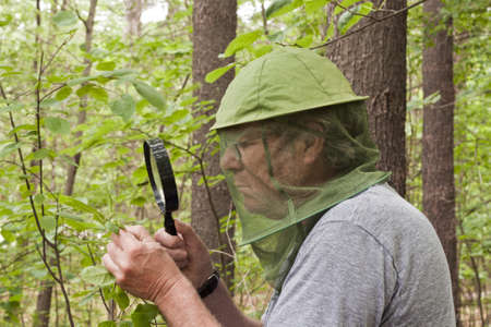 botanist: male botanist inspecting a plant with a magnifying glass
