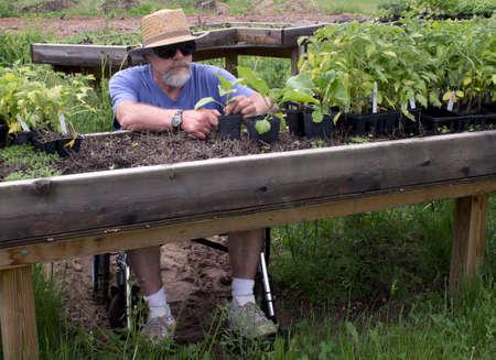 上げられた potting のベンチで彼の植物で働いていた男性を無効に