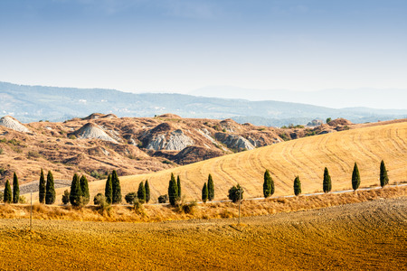 country road flanked with cypresses ascending a hill photo