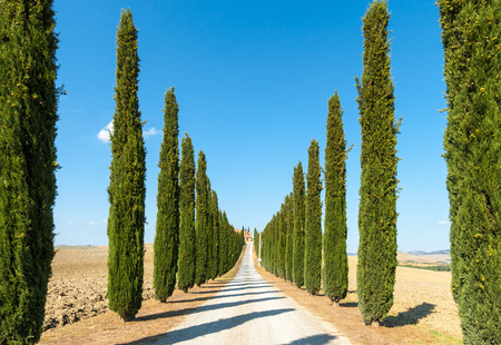 country road flanked with cypresses ascending a hill, in a summer afternoon  photo