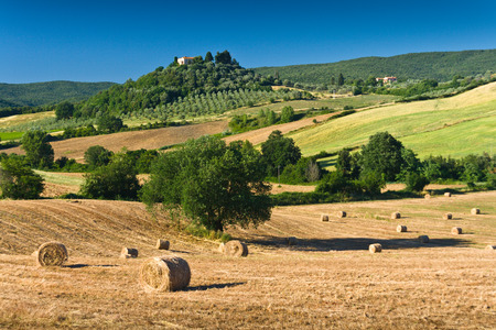 haycock and trees in sunny tuscan countryside, Italy  A small farm on a hill is visible in the background photo