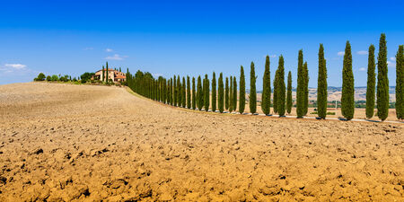 san quirico: country road flanked with cypresses near San Quirico dOrcia in Tuscany, Italy