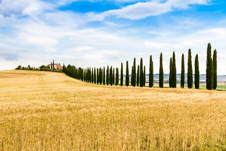 flanked: country road flanked with cypresses near San Quirico