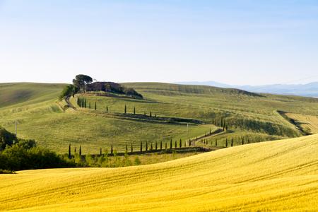 Velden in het zonnige Toscaanse platteland Italië Stockfoto