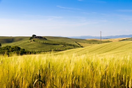 asciano: Fields in sunny tuscan countryside Italy