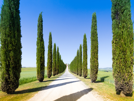 flanked: country road flanked with cypresses in Crete Senesi, Italy