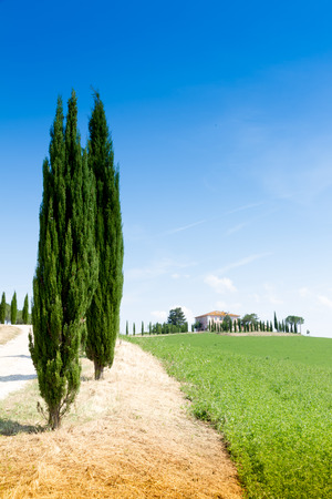 asciano: Country house with cypress on a hill near Siena in Tuscany, Italy
