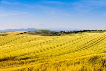 Fields in sunny tuscan countryside, Italy